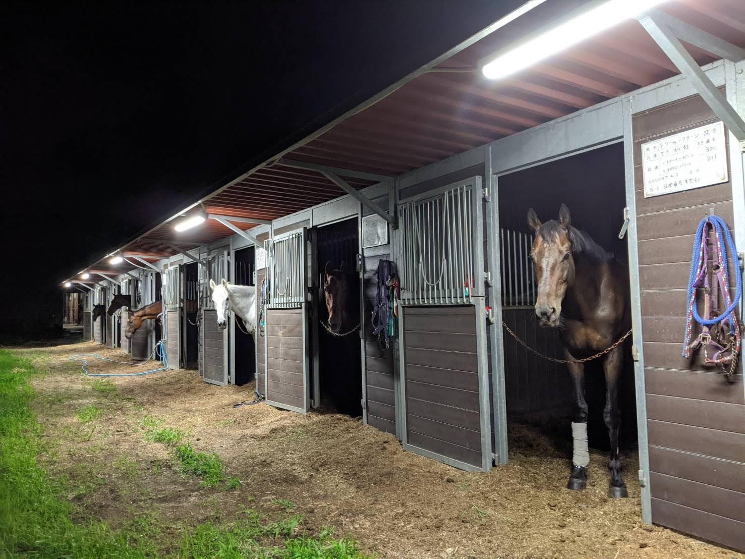 夜の厩舎から: 日本乗馬倶楽部